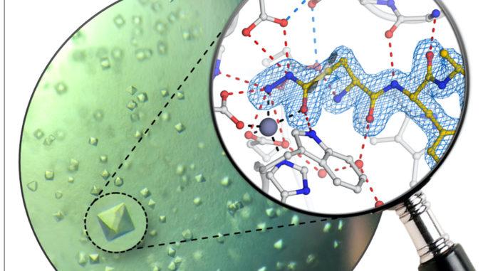 Proteinkristalle des humanen Enzyms Glutaminylzyklase und atomare Struktur des neuen Inhibitors
